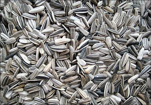Биотопливо из шелухи семечки, утилизация